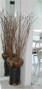 Willow Decor Standing in Tall Vessel, Cherry Hill, NJ