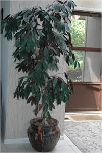 Sold! Artificial Tree with Ceramic Pot, Cherry Hill, NJ